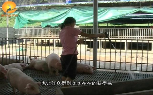 """大新雷平:""""生猪寄养""""模式开启扶..."""