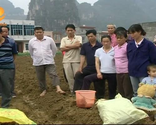 崇左:培育农村特色产业 加大产业...