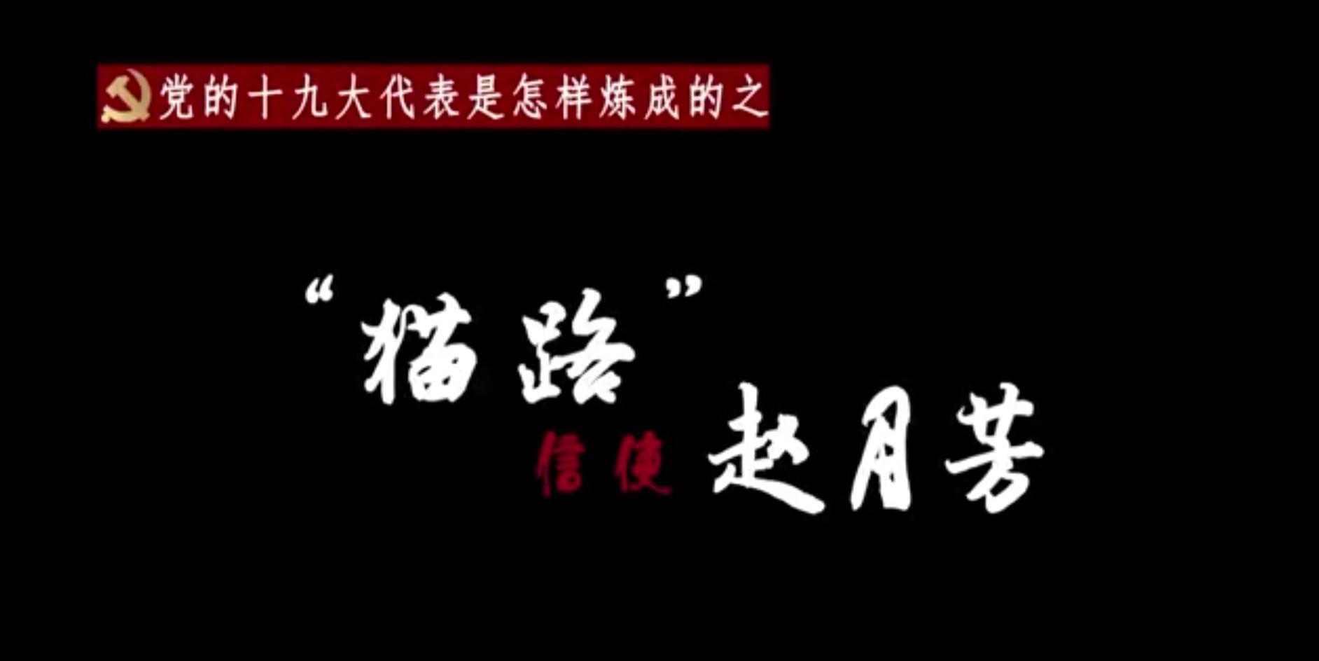 """【十九大代表风采】赵月芳:""""猫路..."""